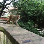 Monkeys in the surroundings of KTH