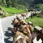 Donkeys are crossing our way