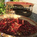 Chili drying in the sun