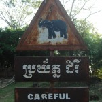 Careful lephants