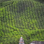 Hindu Temple in front of a Tea Plantation